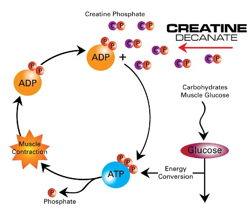 Creatine Process